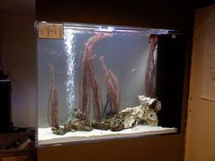 Aquascaping session complete. Thom is the Ichthyogenius indeed! | oleh Brian Daniel Eisenberg