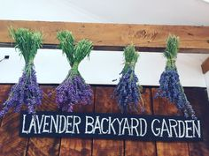 WHAT TO DO after pick your own lavender.  Hang it up as a display, and tying a bow onto middle of the stem to make it look nice. ❤️  www.lavenderbackyard.co.nz  #lavender #lavenderfarm #pyo #pickyourown #hamiltonnz #newzealand