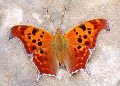 In all its orange beauty