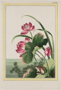 Lotus with Frog - Museum of Fine Arts, Boston.