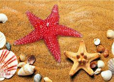 Regalo del mare: una bellissima stella marina :) Disponibile su http://monterosawicks-store.com/candele-col-nostro-cuore-fiamma/candele-artistiche-decorate-mano-c-35_66.html