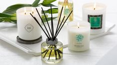 Explore our beautiful range of soy candles and home fragrances, hand-poured and made in Australia. The Signature Collection includes soy candles, diffusers, soap and wax melts. We hope you love them as much as we do. Soy Candles, Scented Candles, Tree Of Life Bracelet, Tree Agate, Hematite Bracelet, Candle Diffuser, Diffusers, Signature Collection, Home Fragrances