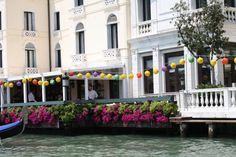 flowers from venice italy - Google Search