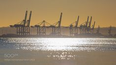Sunset Cranes by Meco. @go4fotos