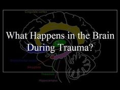 What Happens In the Brain During Trauma? Trauma is the result of overloading the emotional circuits in the brain's control center. Trauma Therapy, Therapy Tools, Art Therapy, Therapy Ideas, Chakra Healing, Traumatic Brain Injury, Post Traumatic, Neurology, Psychiatry
