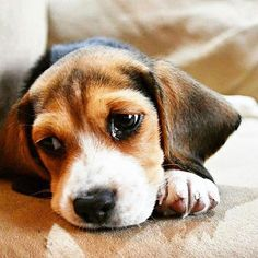 Not sad, just tuckered out! ----- Also, click on the image to check out our…
