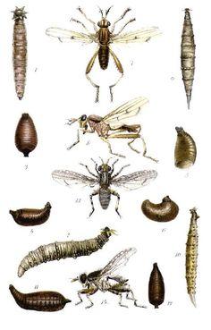 Aquatic Insects 1