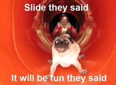 Probably what was going through my grandson's mind when we put him on the slide!