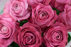 All 4 Love roses at New Covent Garden Flower Market - August 2015 Types Of Flowers, Cut Flowers, New Covent Garden Market, Wonderful Flowers, Love Rose, Flower Market, Pink Roses, Wedding Flowers, Plants