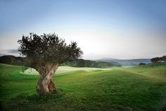 The Romanos, a Luxury Collection Resort, Costa Navarino - The Dunes Course War Photography, Types Of Photography, Landscape Photography, Scene Image, The Dunes, Pebble Beach, Beach Pictures, Hotels And Resorts, Beautiful Landscapes