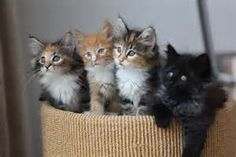 kittens - - Yahoo Image Search Results
