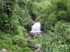 blue mountain jamaica - Google Search