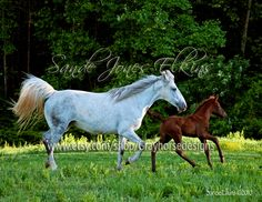 Learning to Fly, Photo of Mother and Foal Racing Across the Open Pasture by Sande Jones-Elkins. $18.00, via Etsy.