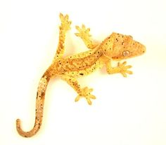 "I don't usually go for dalmations, but he has gorgeous color - ""Poncho"" - Pin-Up line Yellow Super Dal - Pin-up Reptiles"