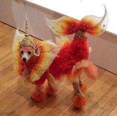 Fiery...mermaid...poodle?