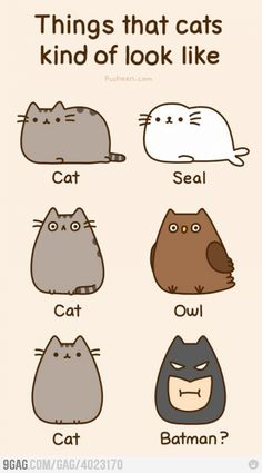 Things that #cats kind of look like...