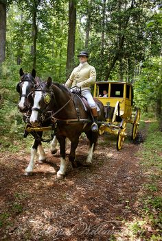 """Carriage driver riding """"Postillian""""  driving the Wythe Chariot (carriage)  at Bassett Hall Woods. Photo by David M. Doody"""