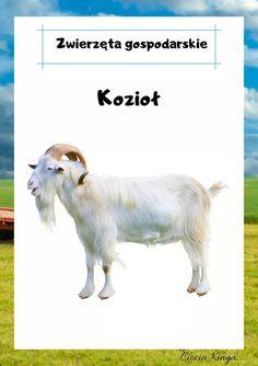Movie Posters, Animals, Animales, Animaux, Film Poster, Animal, Animais, Billboard, Film Posters