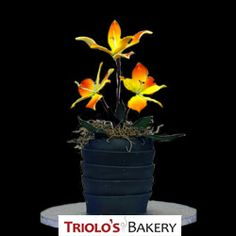 Flowers and Cake combine in this unique Alstroemeria edible floral centerpiece from Triolo's Bakery! Each edible floral arrangement is made with layers of Triolo's Bakery cake and buttercream frosting, wrapped in modeling chocolate sculpted vase, and finished with choice of sugar flowers, or food safe real flowers.