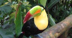 Aves tropicales: el color de la selva mexicana | México Desconocido