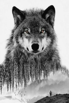 wolf tattoo design wolf tattoo design Geometric is part of Lotus tattoos Forearm Tat - wolf tattoo design Geometric is part of Timeless wolf of the woods Wolf Images, Wolf Photos, Wolf Pictures, Free Pictures, Wolf Tattoo Design, Wolf Design, Animal Design, Wald Tattoo, Tier Wolf