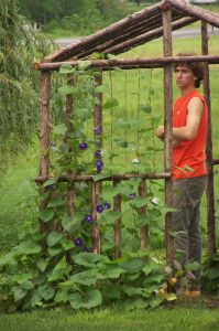 Love the beans and morning glories, this will be a nice shady spot to sit come the heat of summer