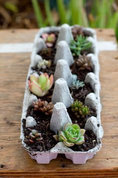 A really cute succulent gift idea and temporary planter using an egg-carton. So easy to make - perfect for a house warming or hostess gift.