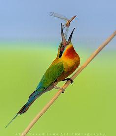 Bee Catcher, amazing photo!