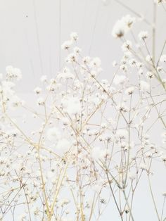 Hello March Please Be Awesome Pinterest Color, Hello March Quotes, White Flowers, Beautiful Flowers, White Flower Background, Organic Forms, L Eucalyptus, Deco Floral, Shades Of White