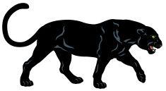 black Panthère vector art illustration