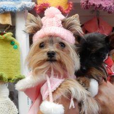 Dog Beanie from Misa Minnie's Happy Store