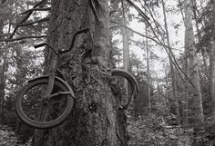 In 1914, a young man leaned his bicycle against a tree, left Vashon Island, Washington, and went off to war, never to return. The tree did what trees do, and two became as one. So goes the legend of Vashon's infamous tree bike — a poignant, romantic, tragic story. - Click image to find more  Pinterest pins