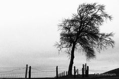 Naked Tree - Black & White Image of a Winter Tree Gothic Style. Sychdyn, Alltami