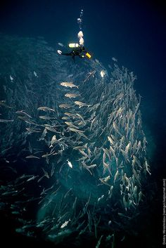 Jacks and diver by Dmitry Miroshnikov