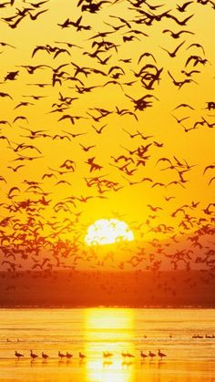 Flocks of Birds ~ At Sunset. Beautiful Sunset, Beautiful Birds, Beautiful World, Silhouette Fotografie, Cool Pictures, Beautiful Pictures, Sunset Silhouette, Silhouette Photography, Mellow Yellow