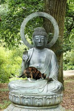 Buddha statue and Cats