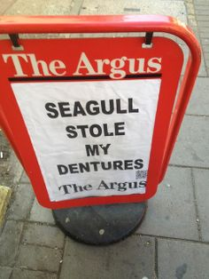 The local newspaper for Brighton Hove is The Argus. One of their headlines: 'Seagull stole my dentures' Brighton Rock, Brighton And Hove, Oh The Irony, Newspaper Headlines, Wonderful Things, Fun Things, Headline News, Stunts