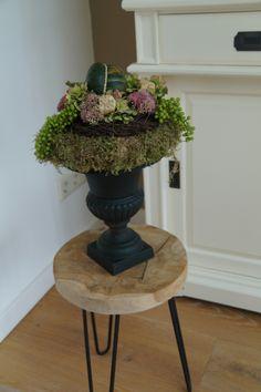 Moss Decor, Fruit Arrangements, Deco Floral, Mushrooms, Planter Pots, Autumn, Halloween, Flowers, Floral Arrangements