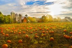 1000 Images About Warwick Ny On Pinterest Orchards Wineries And Pumpkin Picking