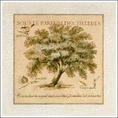 Pascal Cessou - Sous le Parfum des Tilleuls