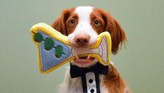 Martini Dog Toy