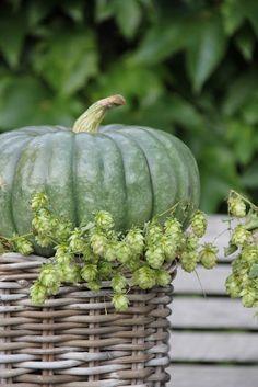 Blue green pumpkin