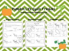 Pumpkin Life Cycle Freebies from Kindergarten Pals on TeachersNotebook.com (3 pages)