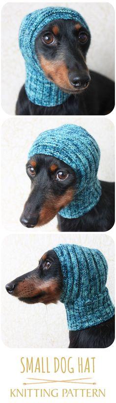 Those eyes! Cut dachshund hat pattern! LOL! #luckyfoxkntis #knittingpattern #doghat #dachshund #minidachshund #doxie #max #browneyes #malabrigo #yarn #crafts #DIY #knit #knitting #knitted #knithat #knittingproject #adorable dog #cutedog #dogs #dog #animals #cute #puppy