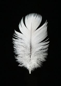 Parrot Feather Portrait Photography Print 5x78x1011x14 by SeanoEye, $10.00