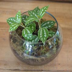 Recycled Glass Planter with Fern/Foliage