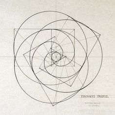 Fibonacci trefoil © Rafael Araujo