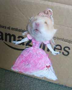 He's simply the best. | You Need To See The World's Most Fashionable Hamster