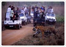 Ranthambore National Park is a wildlife sanctuary and home to a diversity of fauna, resident and migratory birds. The park is well-known for the majestic Bengal Tigers.