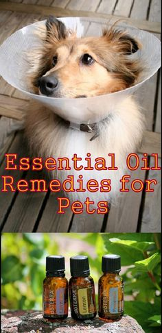 Essential Oils for Pets: Essential Oils Aren't Just For Humans Anymore; use essential oil to calm a traumatized dog, for a mini massage to relax the ill dog aromatically and physically.